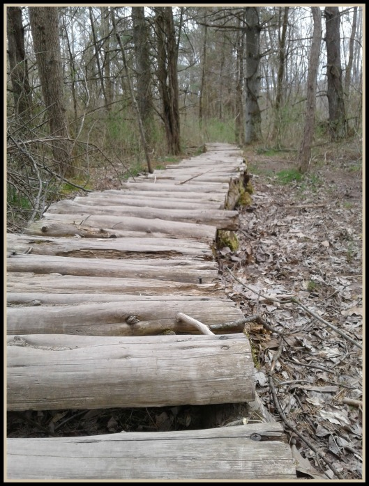 Nock Logs
