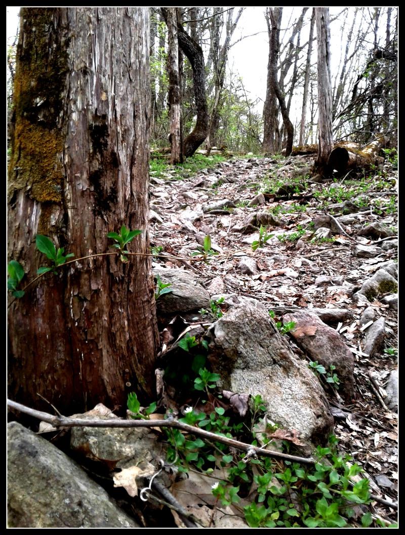 nock tree and rox